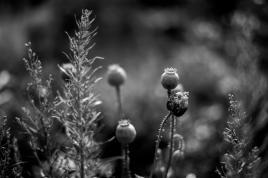 Garden noir